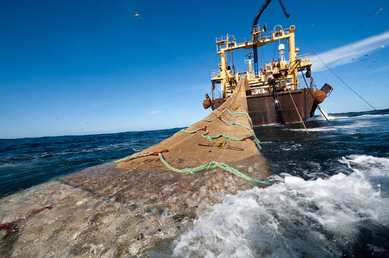 """""""Un gran paso en la protección de los océanos"""": Avanza restricción de la pesca de arrastre"""