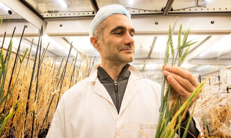 Científicos desarrollan un método de cultivo veloz y más resistente