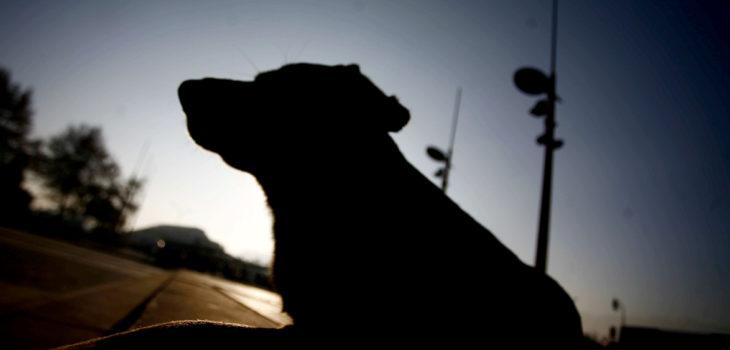 Delincuentes sin escrúpulos envenenan a perros guardianes de empresa agrícola