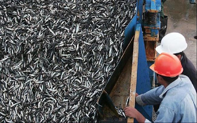 """¿Subasta trucha?: Pescadores piden a Contraloría investigar """"legalidad y vicios"""" en licitación del jurel"""