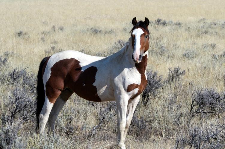 Nueva investigación cambia radicalmente lo que se sabía sobre el origen y el presente de los caballos
