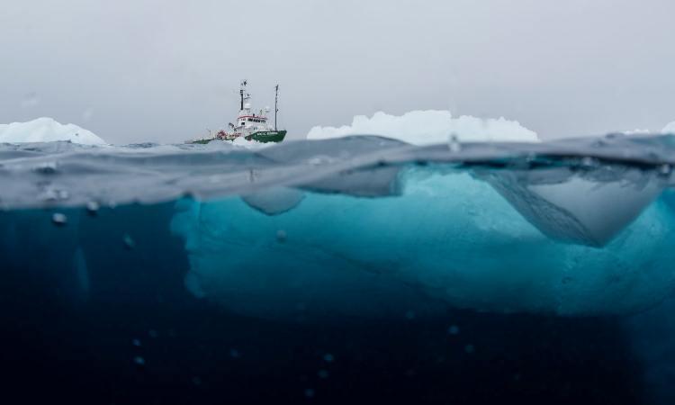 Revelan imágenes de la inexplorada fauna marina en las profundidades de la Antártica