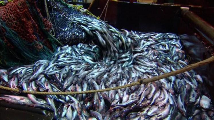 La pesca industrial ocupa más de la mitad de los océanos del mundo