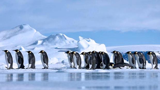 Denuncian que la pesca industrial en la Antártida está afectando a pingüinos, focas y ballenas