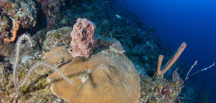 Científicos descubren una zona de profundidad oceánica con decenas de especies desconocidas