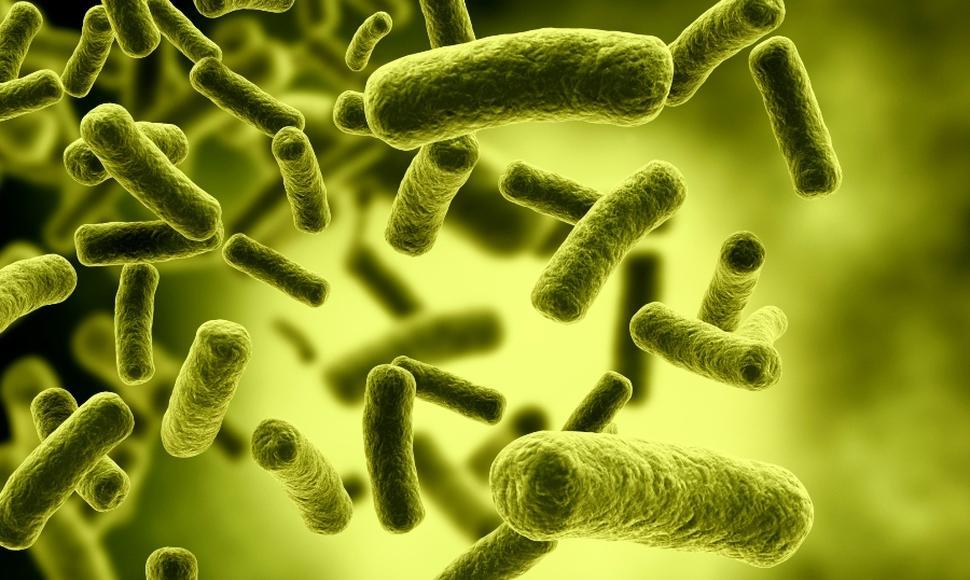 Descubren nuevo antibiótico contra la superbacteria multirresistente