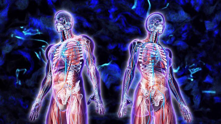 Científicos afirman que han descubierto un nuevo órgano del cuerpo humano