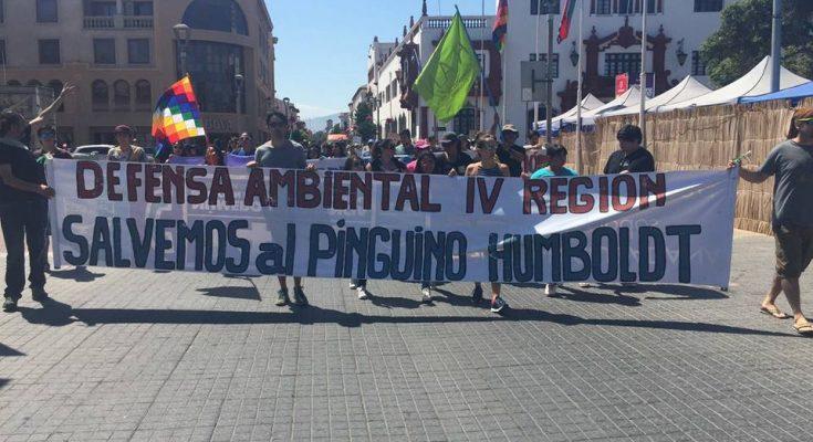 "Nancy Duman, de la ONG Spheniscos: ""Estamos decididos a defender el patrimonio natural de La Higuera"""