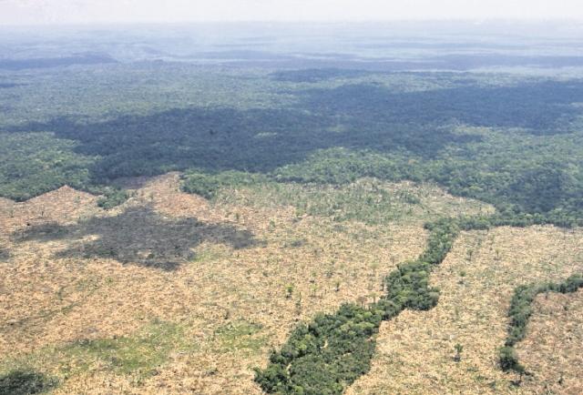 Aborígenes se forman para aprovechar los bosques en Guatemala