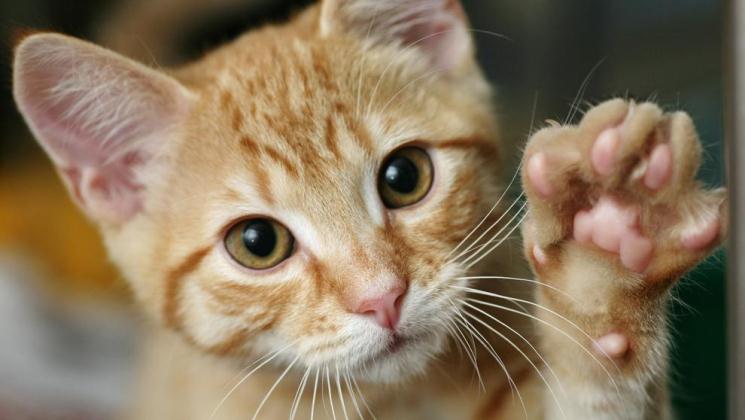 Un parásito de los gatos podría tener la clave para un posible tratamiento contra la malaria