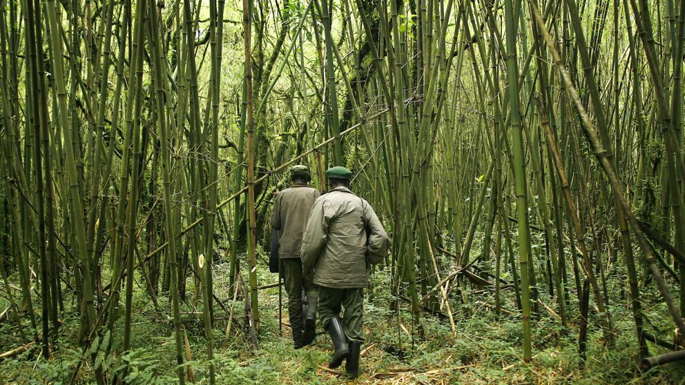 Asesinan a 5 rangers en el Parque Nacional de Virunga