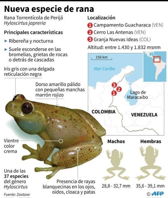 Científicos descubren nueva especie de rana en Venezuela