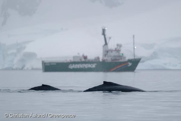 Greenpeace celebra que Chile apoye el establecimiento de Áreas Marinas Protegidas en la Antártica