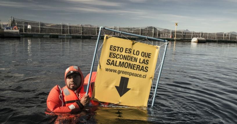 """Greenpeace ante defensa de industria salmonera: «Solo falta que aseguren que son aporte medioambiental para la Patagonia"""""""