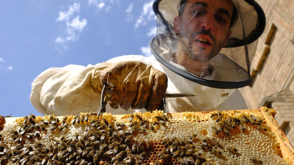 Abejas en peligro: Unión Europea se niega a legislar sobre prohibición de letal insecticida