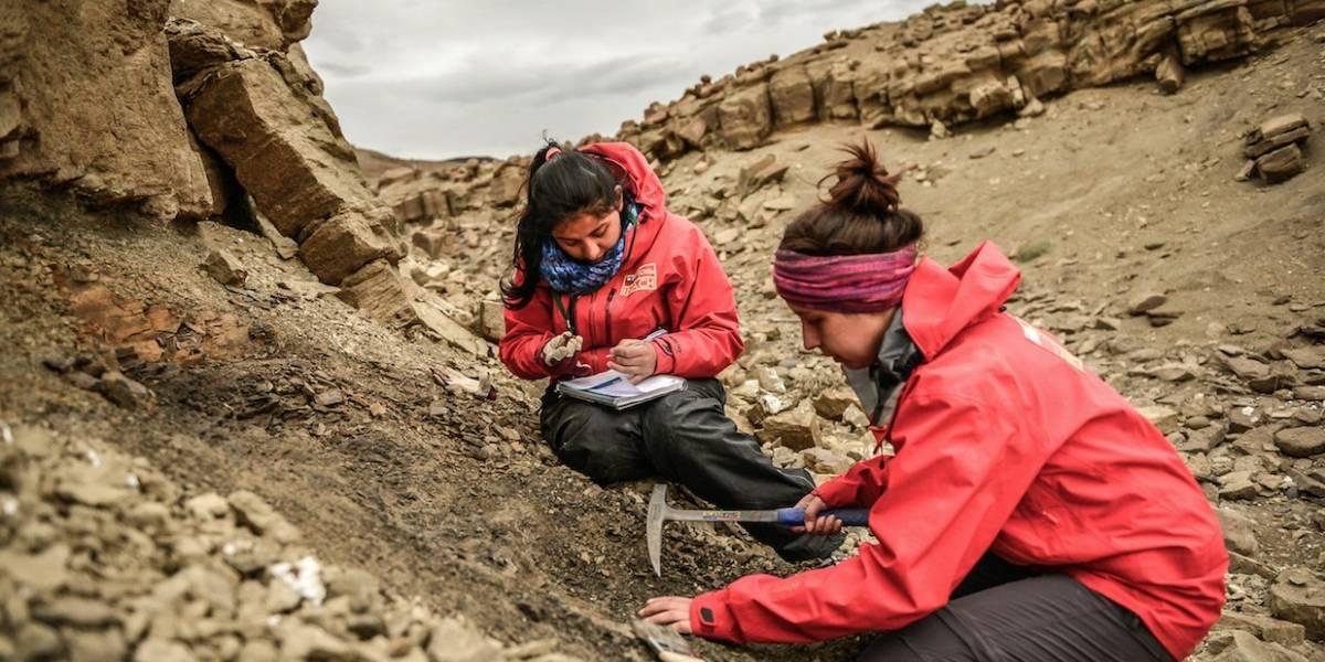 Encuentran los restos intactos de un dinosaurio en Magallanes: sería uno de los más australes y una nueva especie para Chile