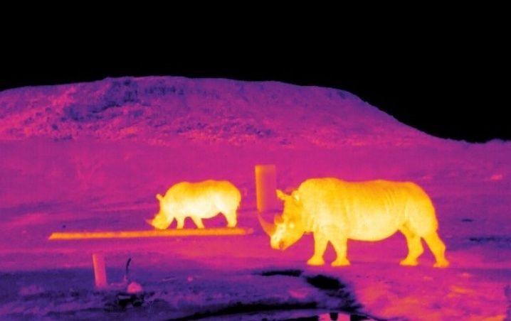 Astro-ecología utiliza drones para proteger especies en peligro de extinción