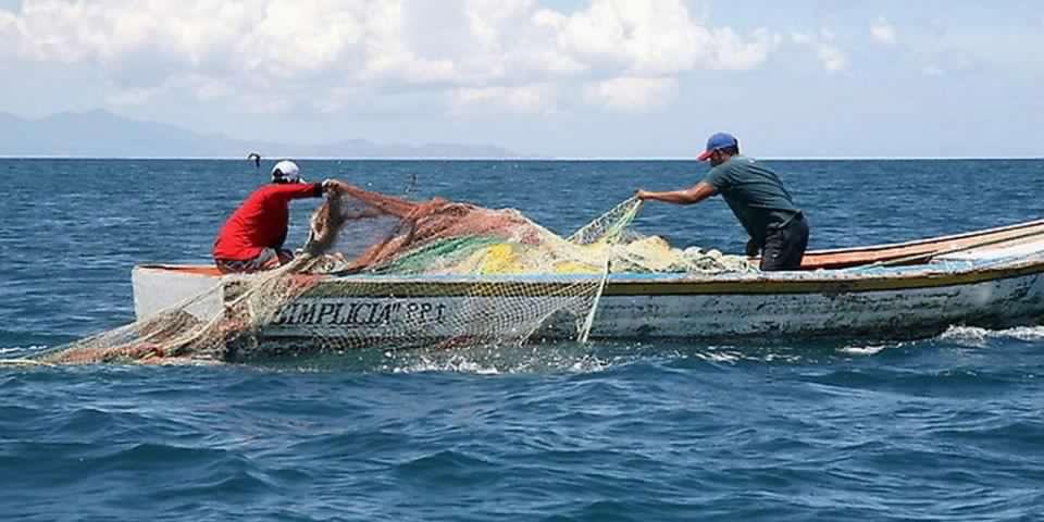 WWF Chile llamó al Senado a aprobar proyecto que moderniza Sernapesca