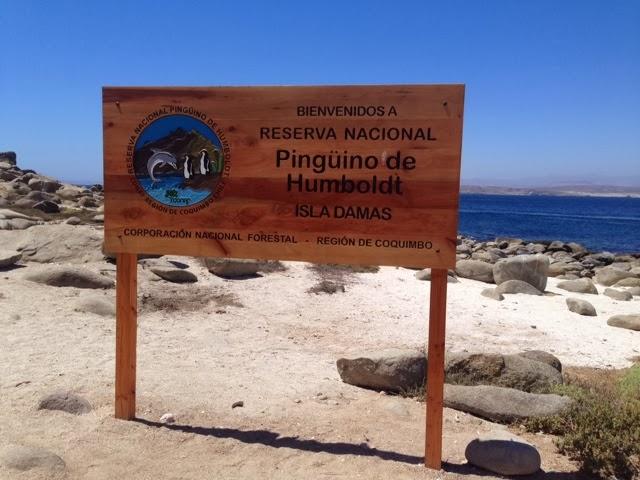 Advierten que proyecto Puerto Cruz Grande amenaza Reserva Pingüinos de Humboldt