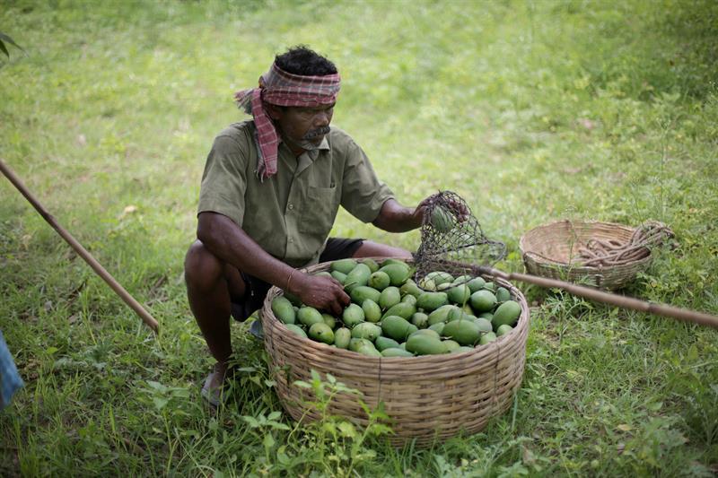 UE adopta nuevas reglas sobre agricultura ecológica