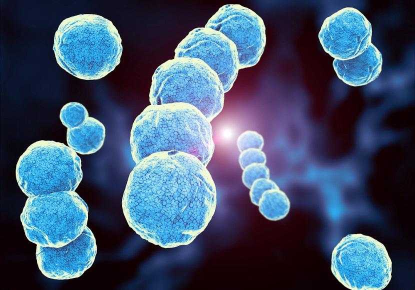 Científicos vinculan la temperatura y densidad poblacional con la resistencia a antibióticos