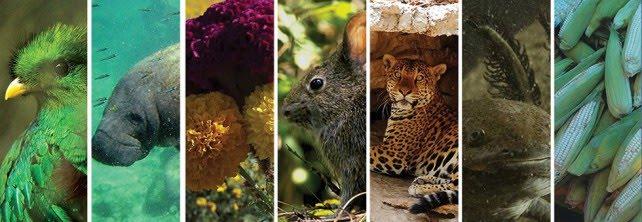 Entre 50 y 300 especies se extinguen diariamente en el mundo