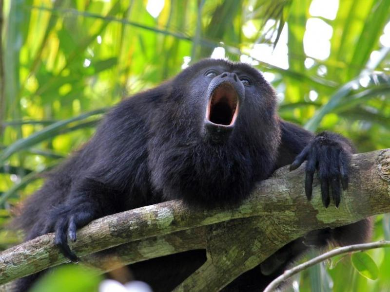 Guatemala tiene 2.276 especies de flora y fauna en peligro de extinción