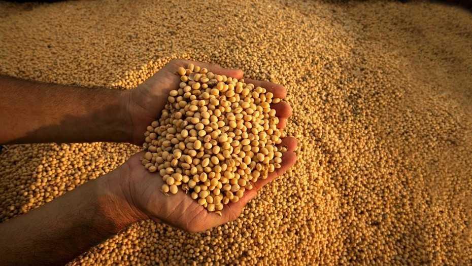 Baja cosecha de soja tendrá un gran impacto en la economía argentina