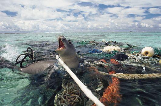 """La """"pesca fantasma"""" es una amenaza para los ecosistemas marinos"""