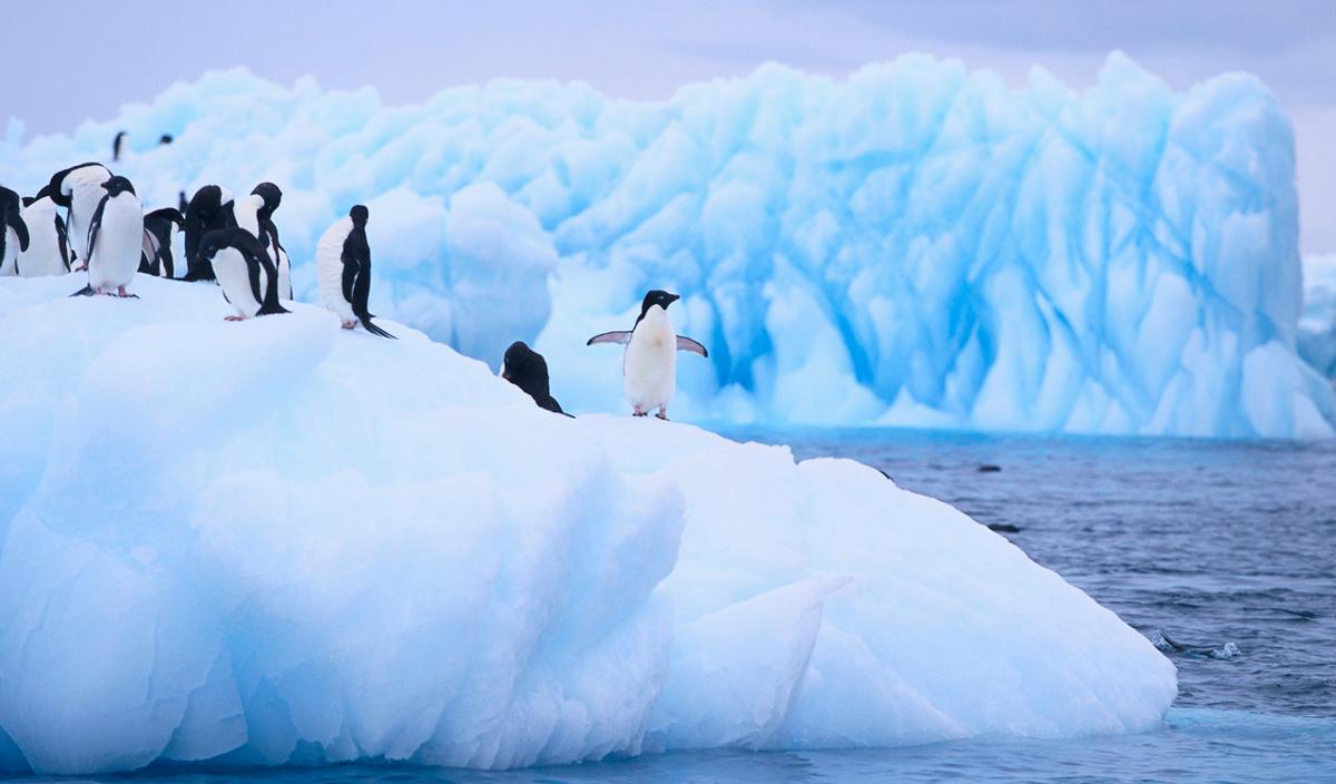 Agua y nieve de la Antártida contaminadas de microplásticos y químicos
