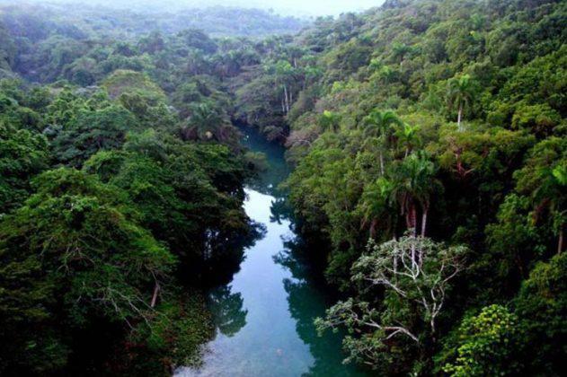 Cuba siembra más de 17 mil hectáreas de bosques por año