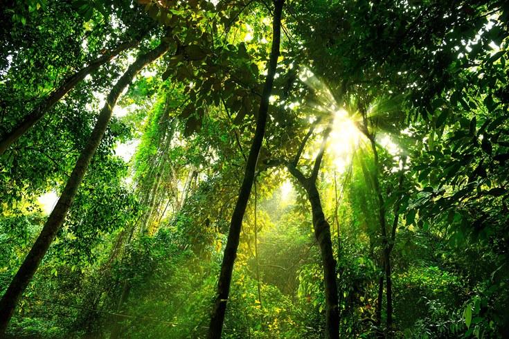 El planeta perdió 15 millones de hectáreas de árboles por minuto en 2017
