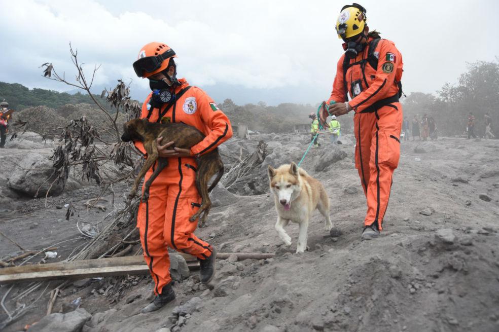 El Rescate de animales está desplegado en Guatemala tras erupción del volcán