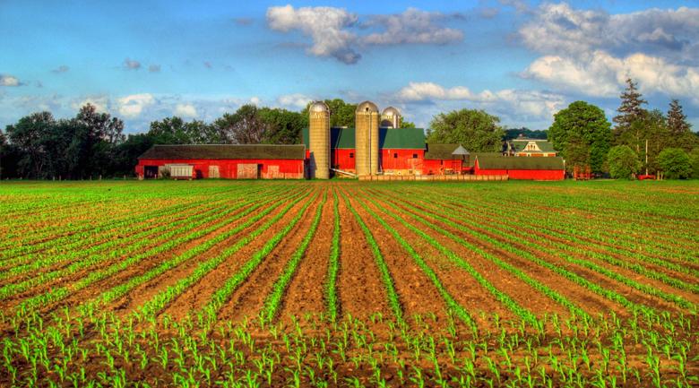 Biocombustibles, enemigos de la seguridad alimentaria del planeta (Parte I)