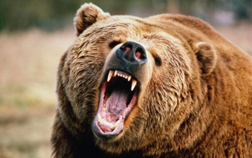 Hombre muere tras  ser perseguido por un oso (+Video)