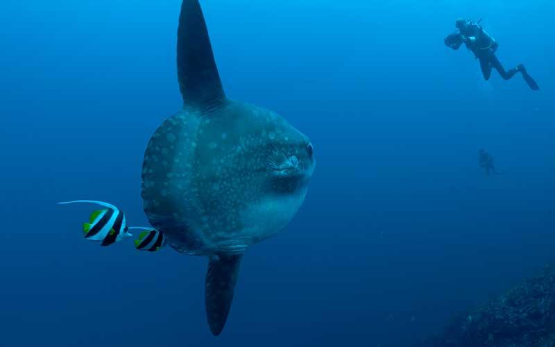¿Conoces algo así? El pez más  grande con el cerebro más pequeño