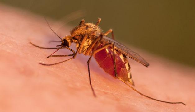 Costa Rica declara estado de alerta por nuevos casos de malaria