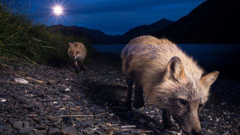 Los animales prefieren la noche por miedo a los seres humanos
