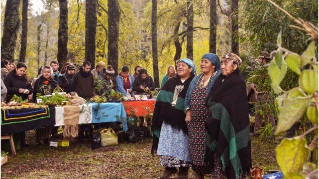 Dar a los indígenas la protección de los bosques ayudaría a frenar la deforestación
