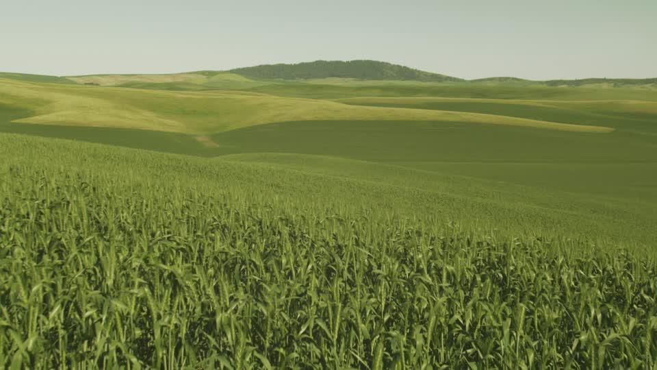 Guerra comercial de Trump comienza a dejar daños colaterales en granjeros estadounidenses