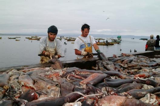 """Pescadores artesanales del Biobío: """"Si los industriales se quieren ir a Perú y Ecuador ¡que se vayan!"""""""