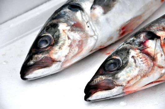 """Artesanales apoyan denuncia de Sernapesca contra pesqueras: """"Quedó demostrado que los industriales hacen pesca ilegal"""""""