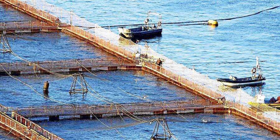Pescadores artesanales presentan querella criminal por escape de salmones