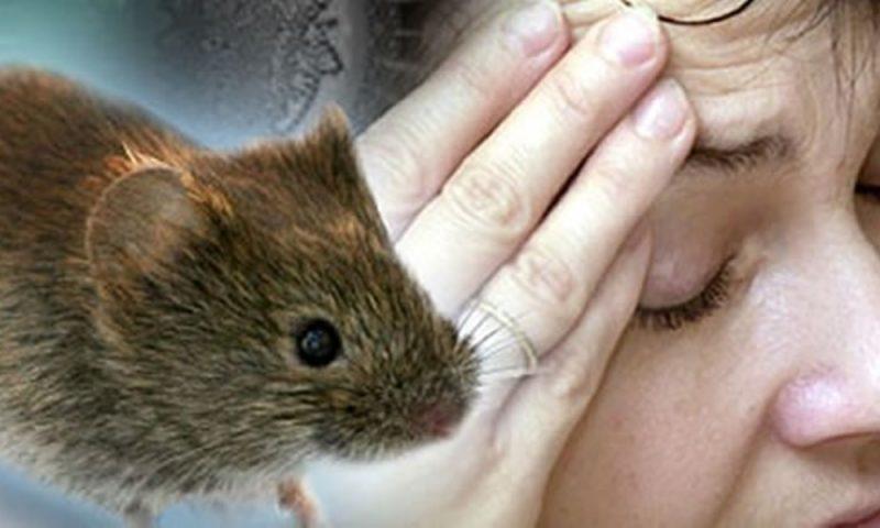 Se estima que 75% de las enfermedades humanas provienen de los animales