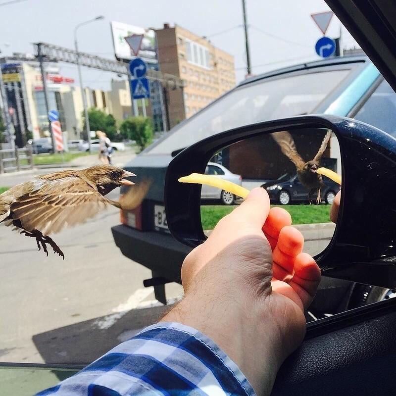 """El reflejo de un gorrión que parece sacado de la película """"Alicia a través del espejo"""""""