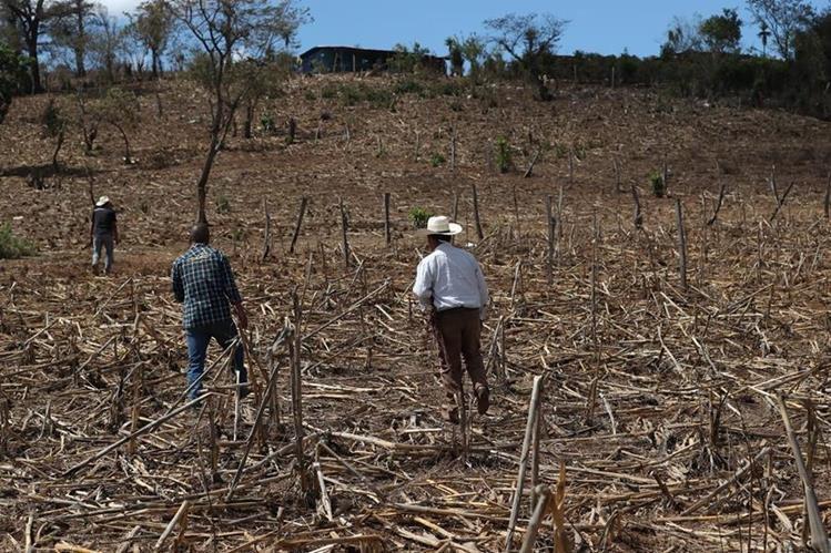 El largo verano de Guatemala significa sed y cosechas perdidas