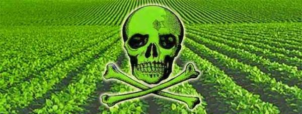 AMLO frente a la encrucijada de los agrotóxicos y cultivos transgénicos