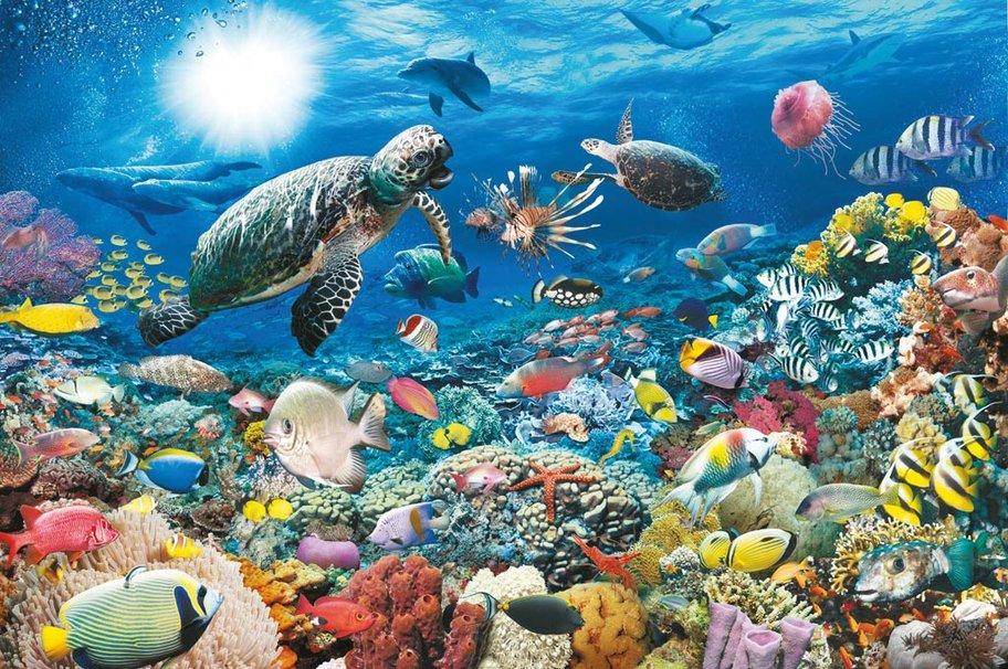 Hay mas vida en el agua fría