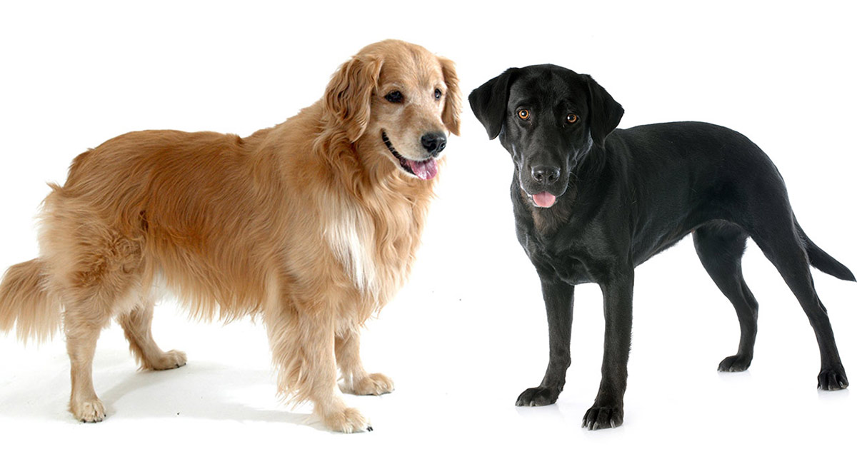 ¡Demostrado! Los perros notan la angustia del hombre (+VIDEO)