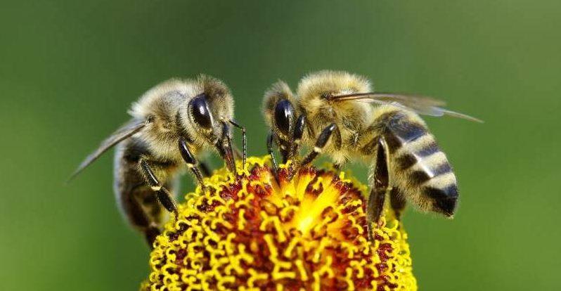 (Video) México celebró su primer Día nacional de las abejas